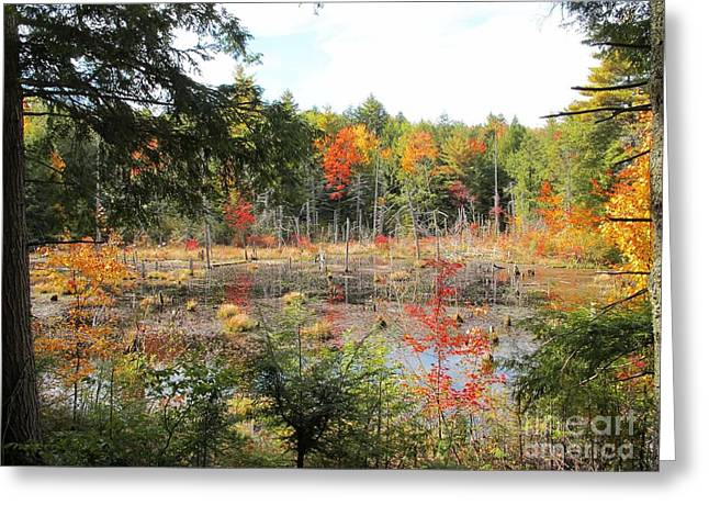 Autumn Wetlands Greeting Card by Linda Marcille