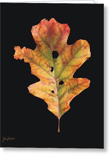 Autumn White Oak Leaf 2 Greeting Card