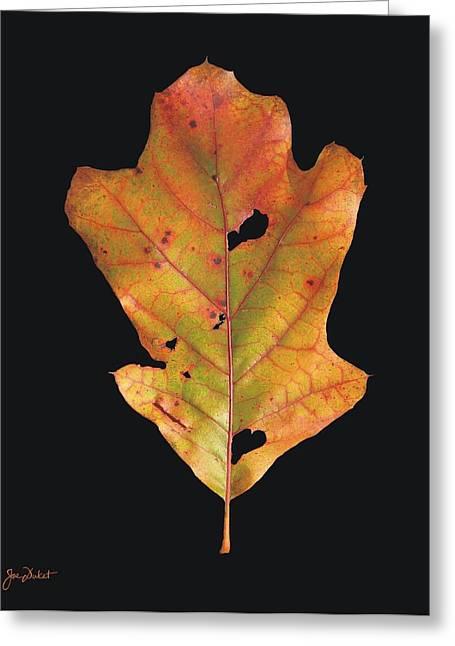 Autumn White Oak Leaf Greeting Card