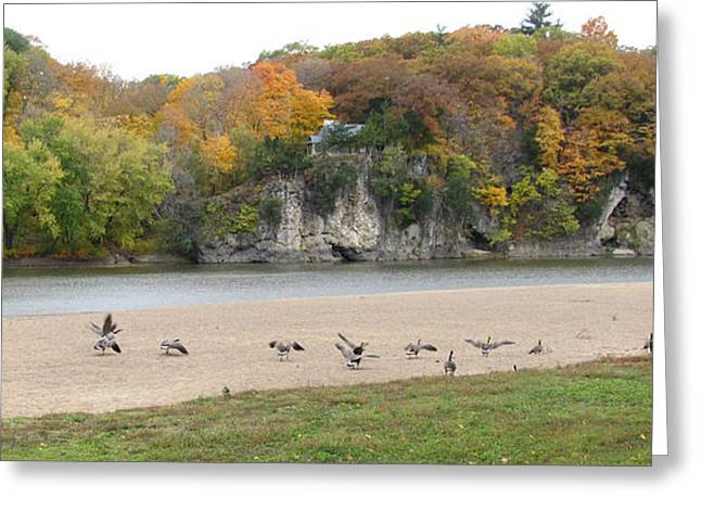 Autumn Wildlife Geese And Foliage Greeting Card by Adri Turner