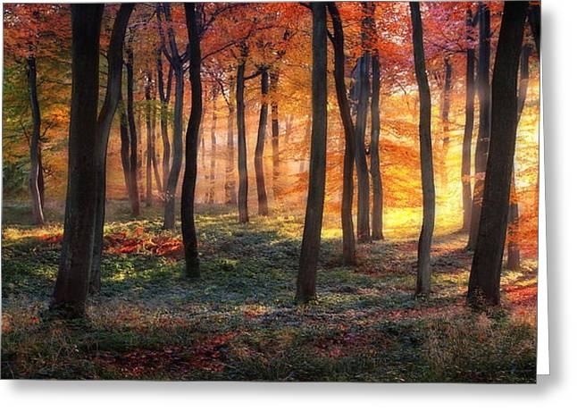 Autumn Woodland Sunrise Greeting Card by Photokes