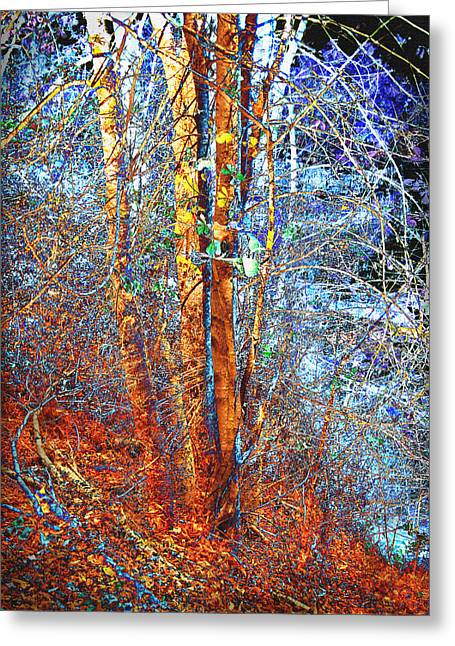 Autumn Woods Greeting Card by Ann Powell