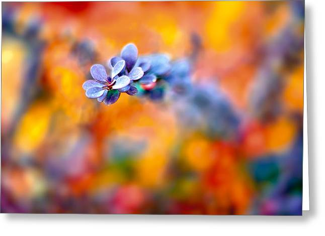 Autumnal Berberis Greeting Card