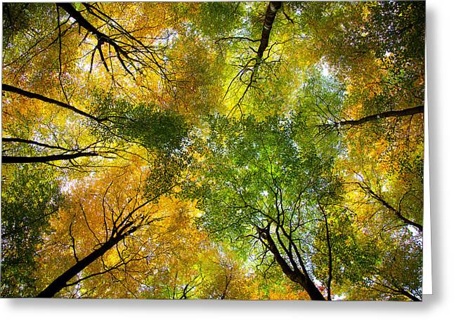 Autumnal Display Greeting Card by Dave Bowman