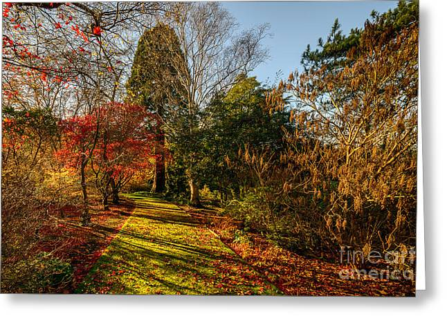 Autumnal Forest Greeting Card by Adrian Evans