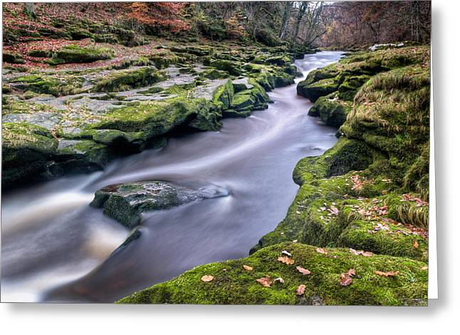 Autumnal Strid Greeting Card by Chris Frost