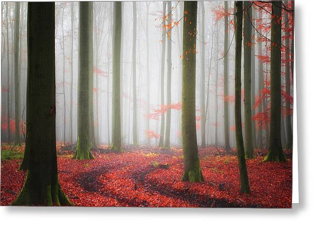 Autumnal Tracks Greeting Card