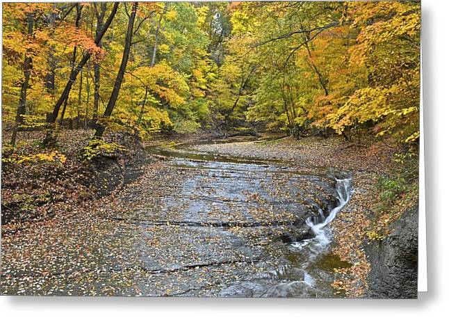 Autumnal Vista Greeting Card by Starving  Artist