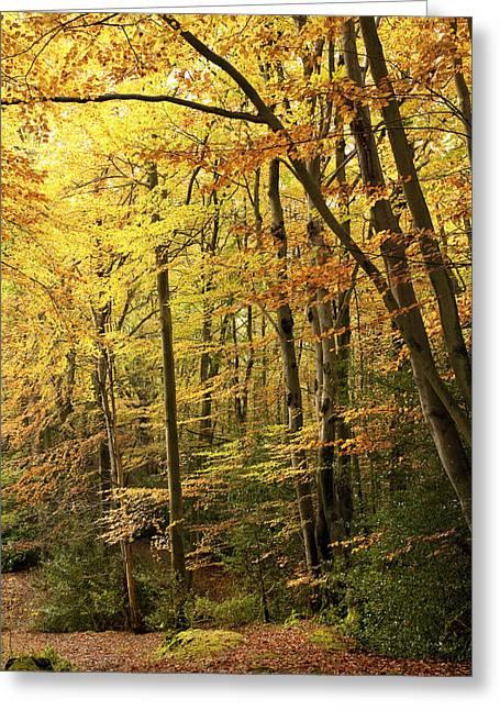 Autumnal Woodland Iv Greeting Card by Natalie Kinnear