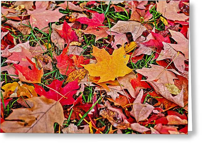 Autumn's Blanket Greeting Card by SCB Captures