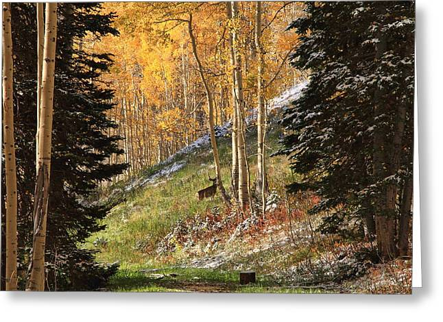 Autumn's Blessing Greeting Card by Gene Praag