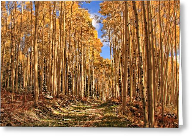 Autumn's Embrace Greeting Card by Gene Praag