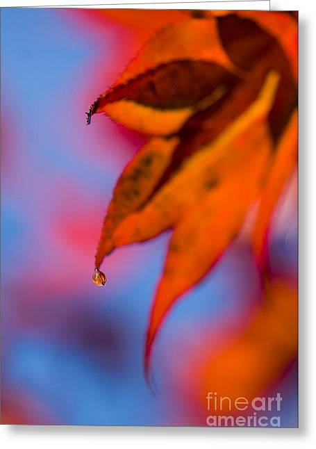 Autumn's Finest Greeting Card by Anne Gilbert