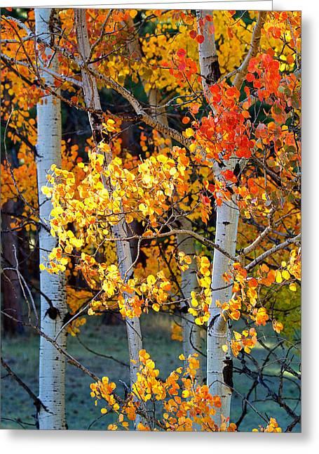 Autumn's Fire Greeting Card by Jim Garrison