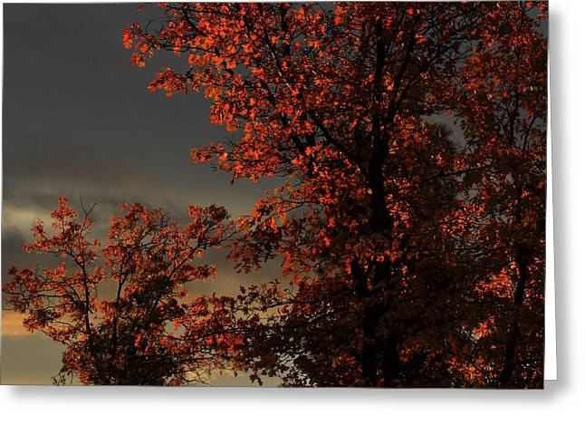 Autumn's First Light Greeting Card by James Eddy