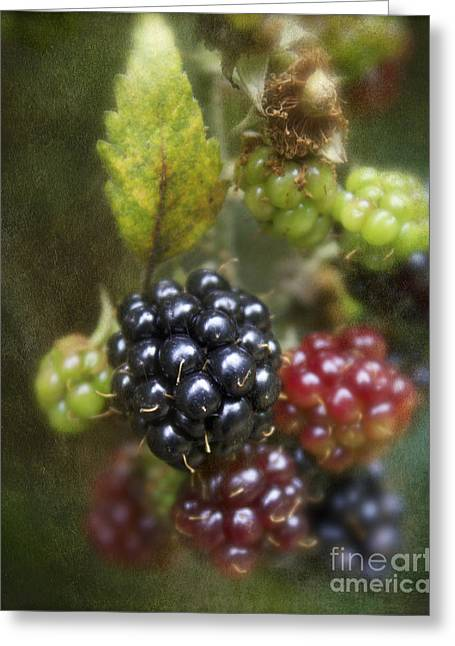 Autumn's Fruit Greeting Card by Michelle Orai