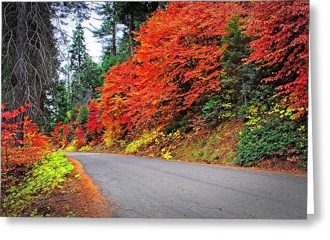 Autumn's Glory Greeting Card by Lynn Bauer