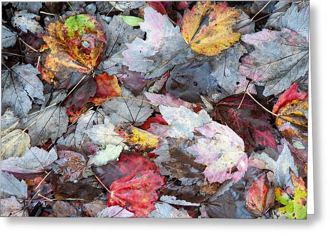 Autumn's Leaves Greeting Card