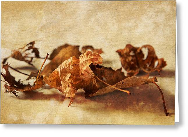 Autumn's Leavings Greeting Card by Caitlyn  Grasso