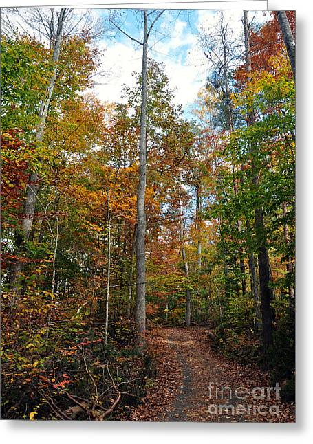 Autumn's Path Greeting Card by Gina Savage