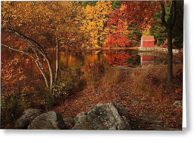 Autumns Path Greeting Card by Karol Livote