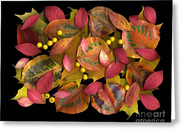 Autumn's Rainbow Greeting Card by Dale Hoopingarner