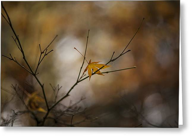 Autumns Solitude Greeting Card by Mike Reid