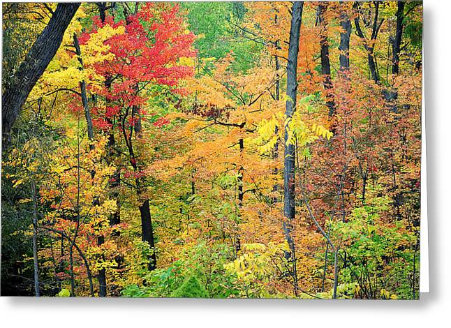 Autumns Splendor Greeting Card by Frozen in Time Fine Art Photography