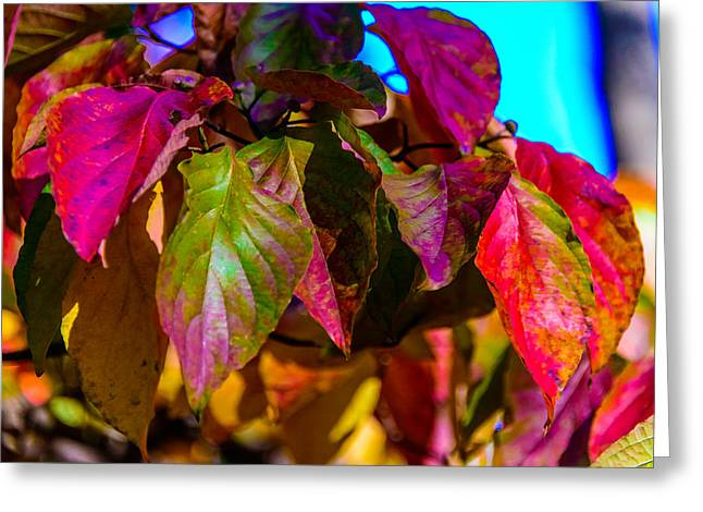 Greeting Card featuring the photograph Autumns Wake Up Call by Louis Dallara