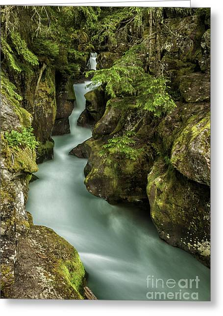 Avalanche Creek - Glacier National Park Montana Greeting Card by Thomas Schoeller