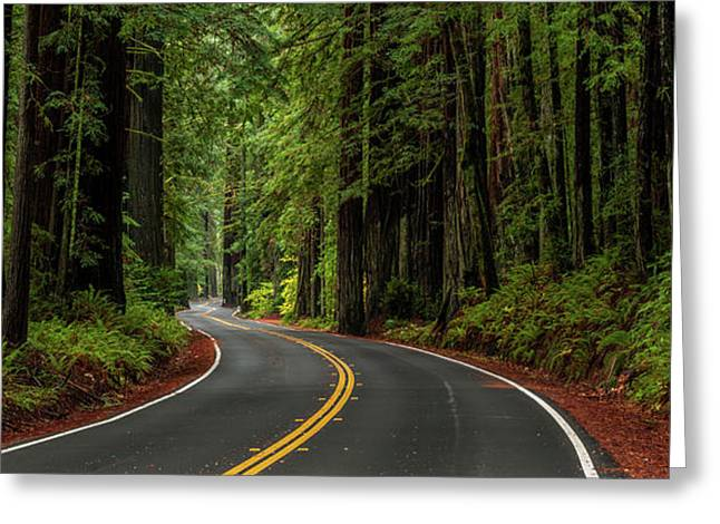 Avenue Of The Giants Passing Greeting Card