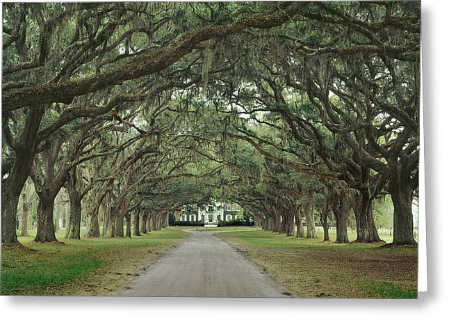 147706-avenue Of The Oaks  Greeting Card