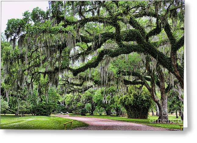 Avery Island Vi Greeting Card