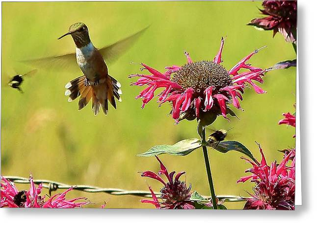 Greeting Card featuring the photograph Aw Buzz Off by Julia Hassett