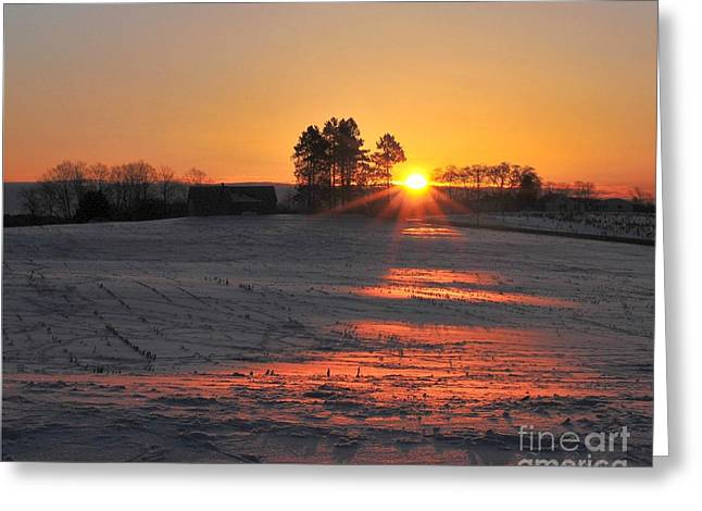Greeting Card featuring the photograph Awakening by Terri Gostola