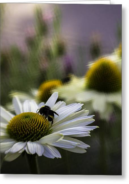 Awannabee Greeting Card by Jean OKeeffe Macro Abundance Art
