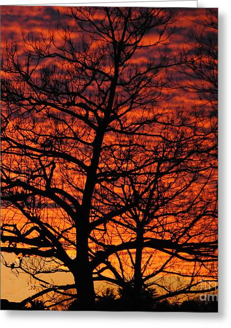 Awesome Winter Sunset - Longwood Gardens - Square Greeting Card by Jacqueline M Lewis