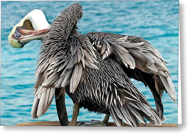 Seabirds Greeting Cards - Awkward Pelican Greeting Card by Jean Noren