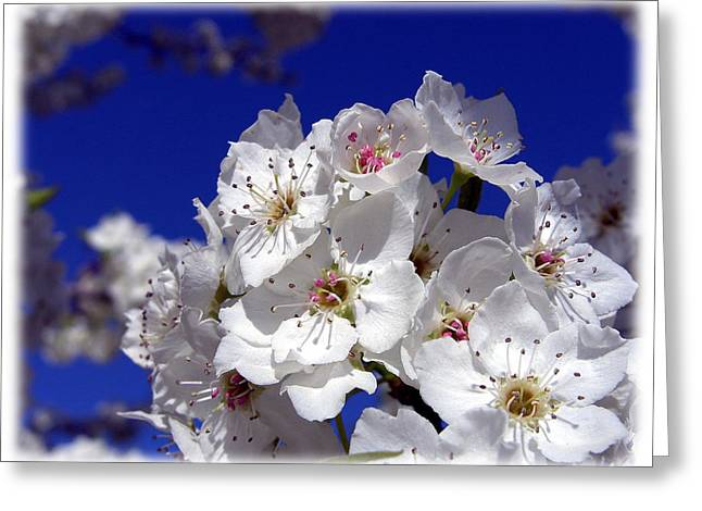 Awsome Blossoms Greeting Card by Gerry Childs