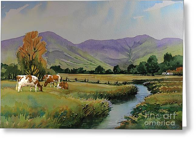 Ayrshire Cattle In Langdale Greeting Card by Anthony Forster