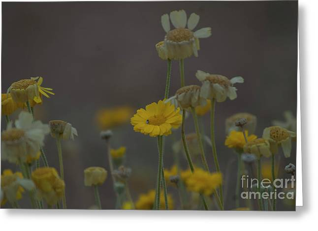 Greeting Card featuring the photograph Az Flowers by Rod Wiens
