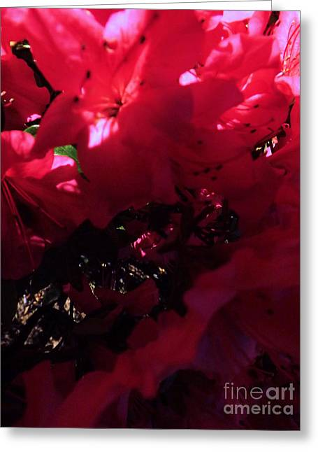 Greeting Card featuring the photograph Azalea Abstract by Robyn King