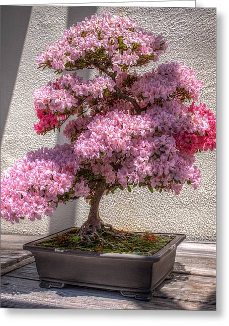 Azalea Bonsai Greeting Card