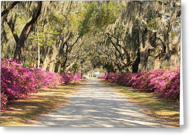 Greeting Card featuring the photograph azalea lined road in Spring by Bradford Martin