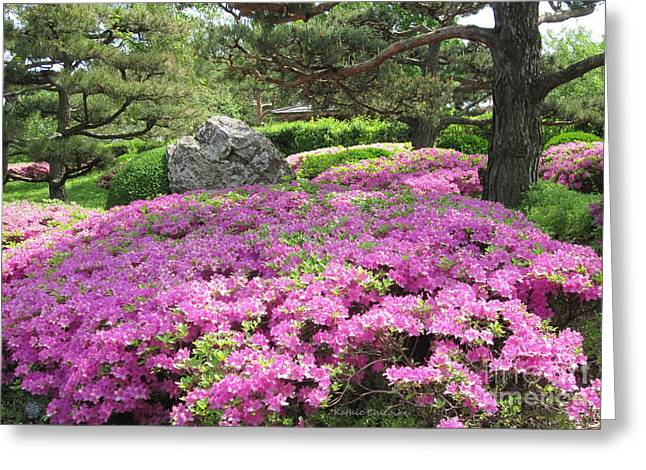 Greeting Card featuring the photograph Azalea Path by Kathie Chicoine