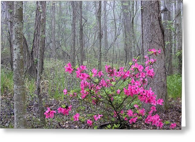 Azaleas In Fog Greeting Card by Cindy McIntyre