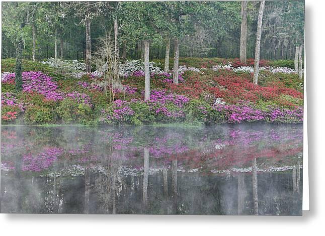 Azaleas In Full Bloom Reflected In Calm Greeting Card