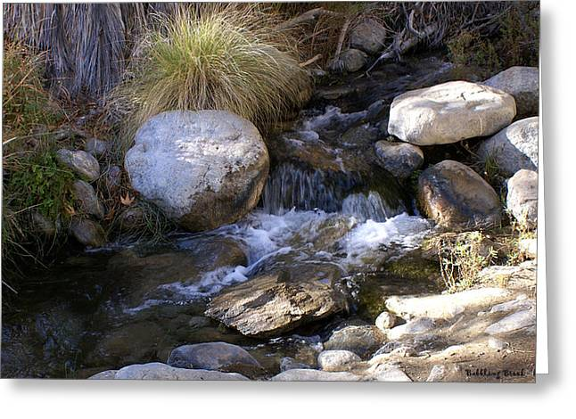 Babbling Brook Greeting Card by Barbara Snyder
