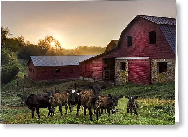 Babies On The Farm Greeting Card by Debra and Dave Vanderlaan