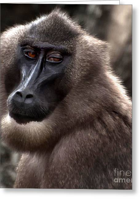 Baboon Greeting Card